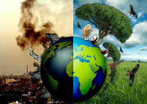 Giấy tái chế là gì? Quy trình tái chế giấy